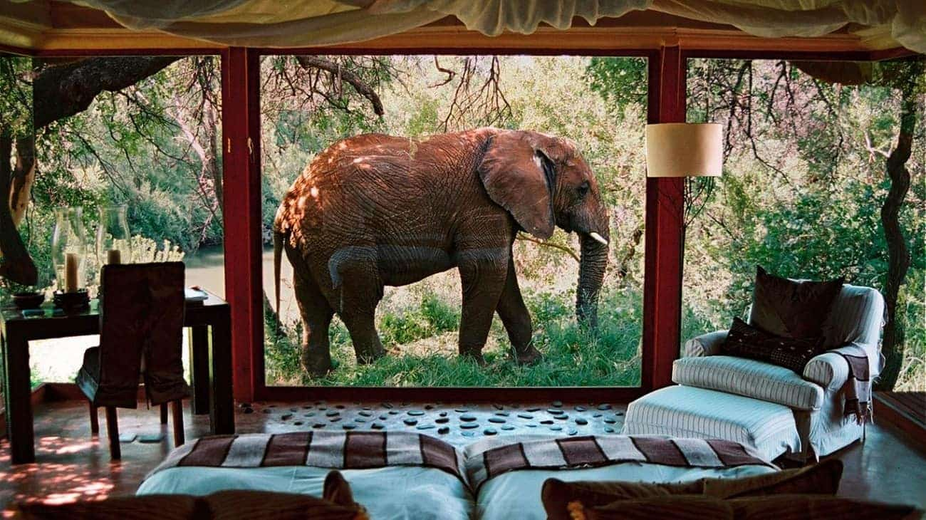 safari-hotel-elephant-afrique-du-sud-decouverte