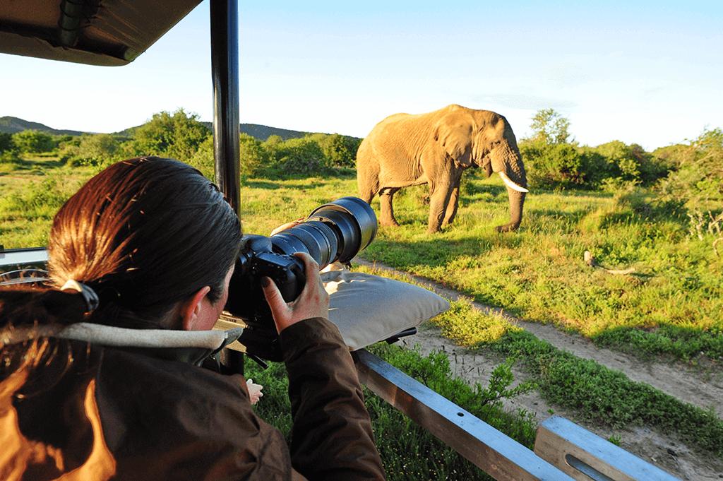 safari-photographie-afrique-du-sud-decouverte