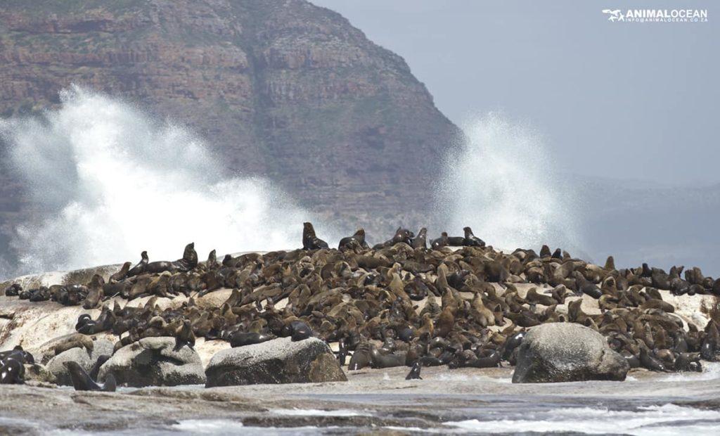 iles-duiker-island-afrique-du-sud-decouverte