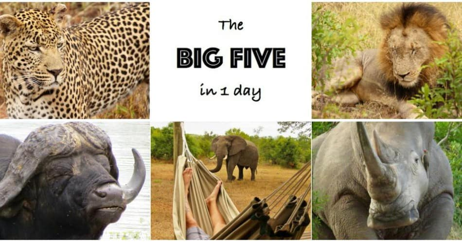 cool-big-five-afrique-du-sud-decouverte