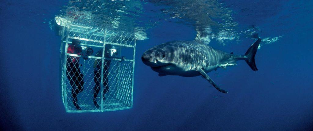 cool-plongee-cage-afrique-du-sud-decouverte