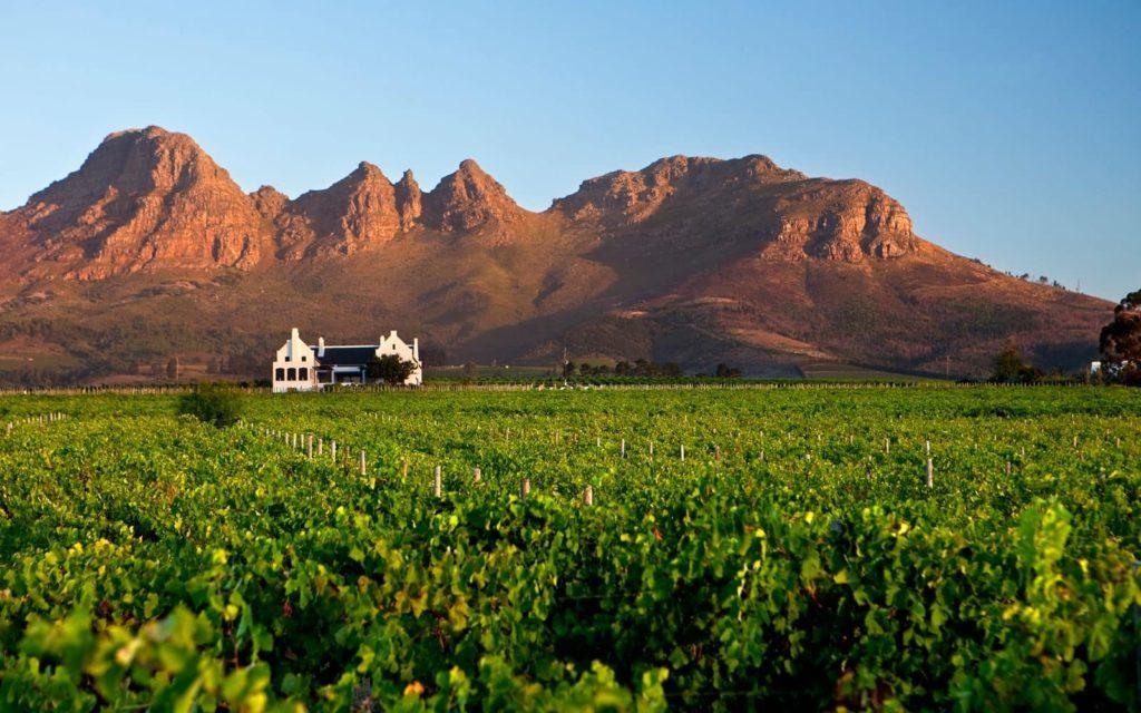 wine-&-food-tourism-vigne-afrique-du-sud-decouverte