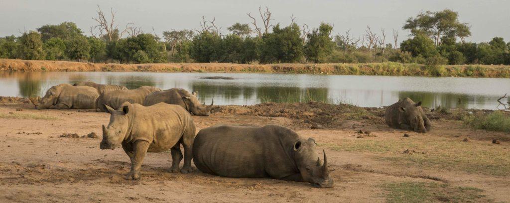 swaziland-hlane-royal-national-park-afrique-du-sud-decouverte