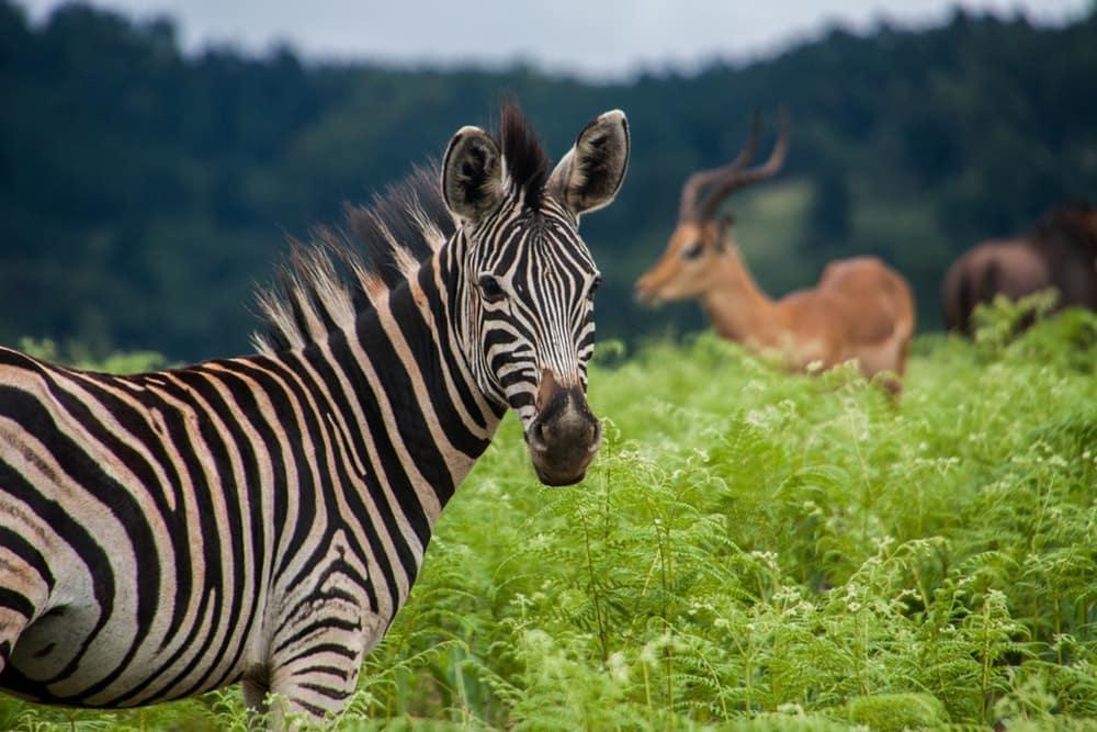 swaziland-mbuluzi-afrique-du-sud-decouverte