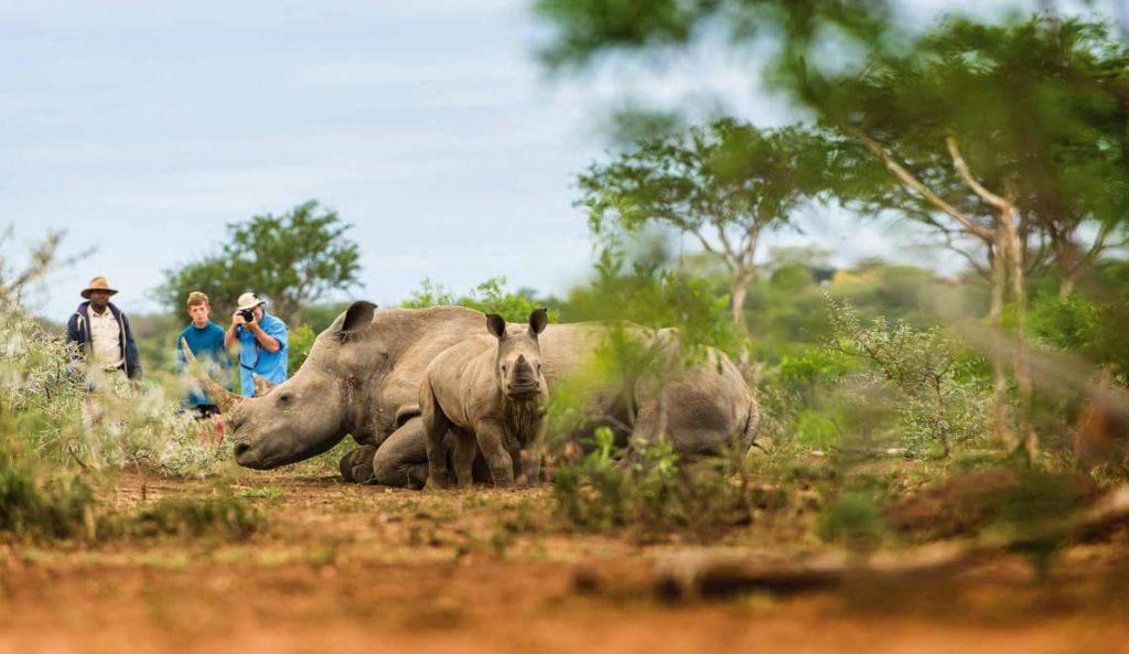 swaziland-mkhaya-afrique-du-sud-decouverte