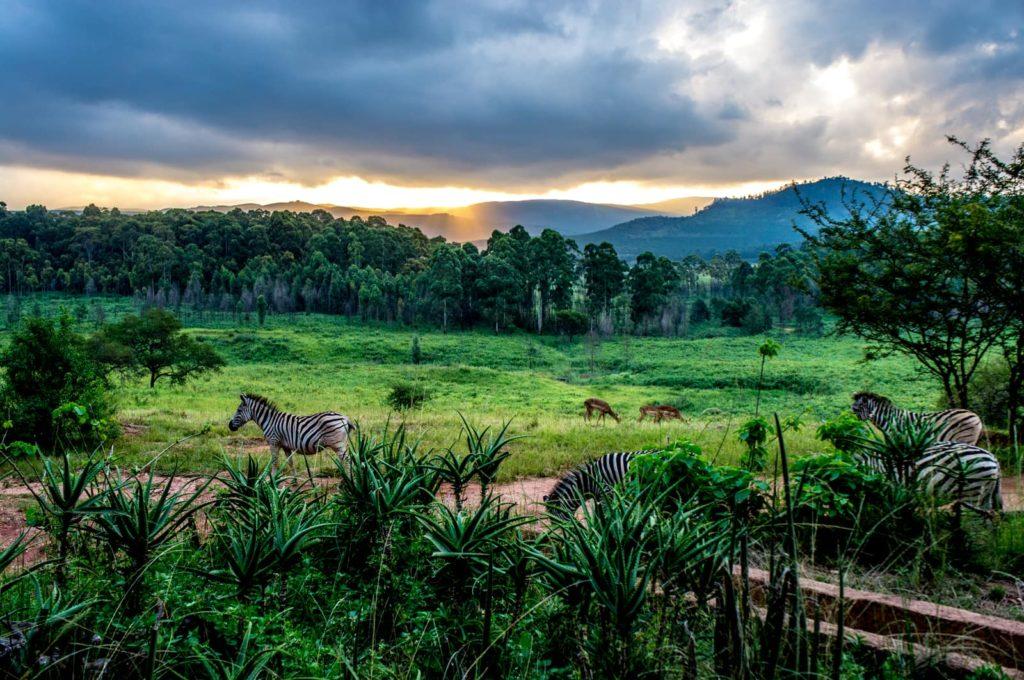 swaziland-mlilwane-sanctuary-afrique-du-sud-decouverte