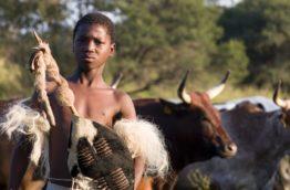 betail-zoulou-jeune-afrique-du-sud-decouverte