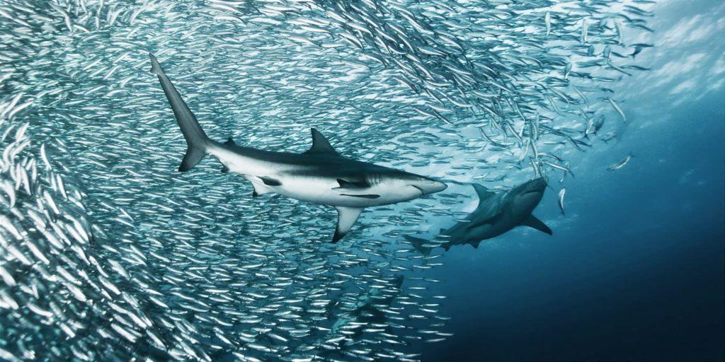 afrique-du-sud-sardin-run-decouverte