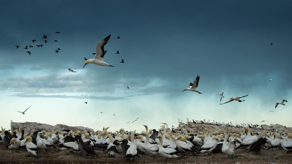 bird-island-afrique-du-sud-decouverte
