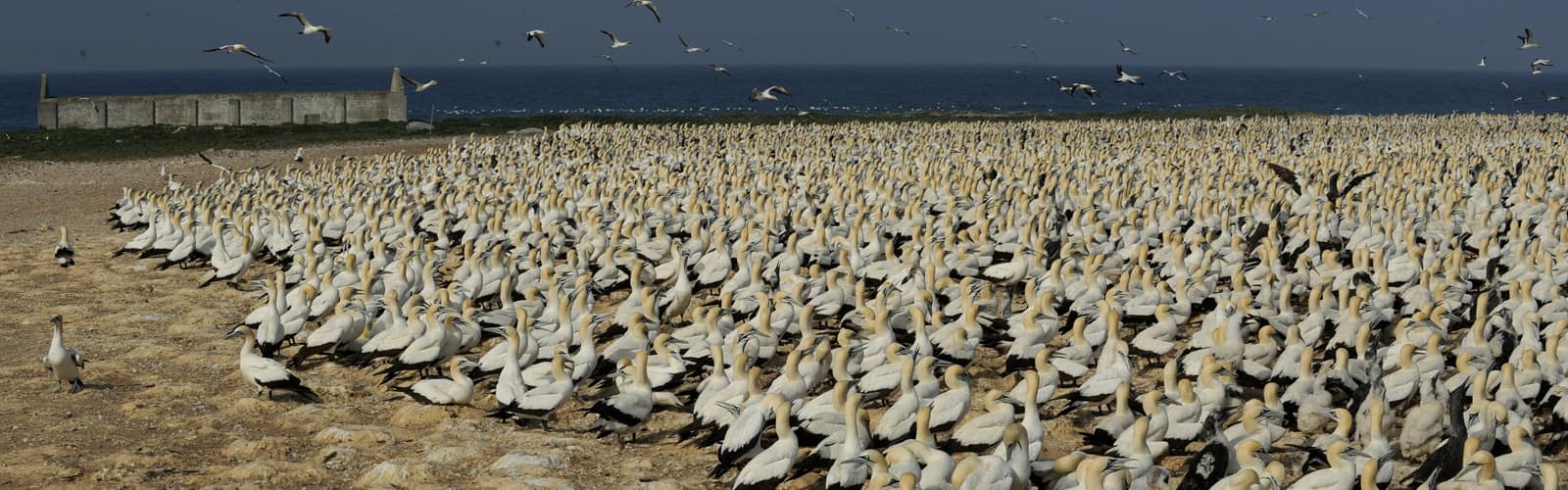 bird-island-cover-afrique-du-sud-decouverte