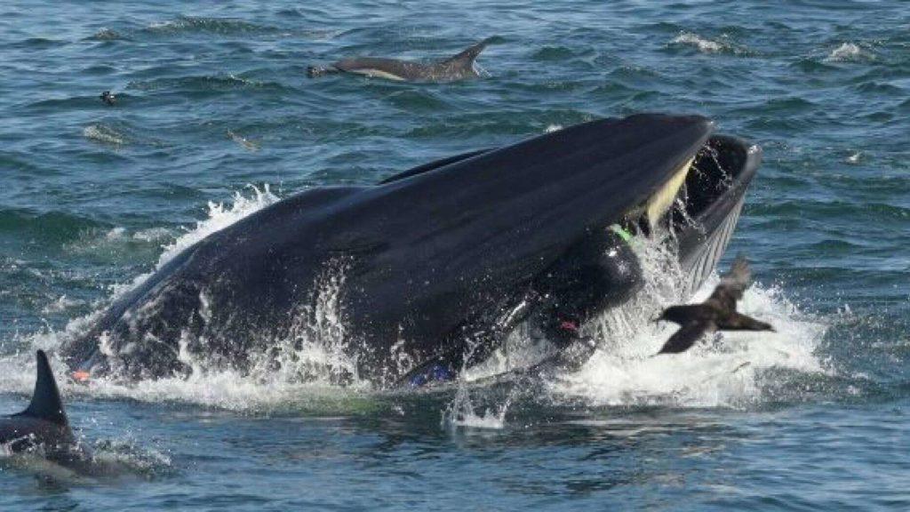 zones-de-protection-marine-baleine-afrique-du-sud-decouverte