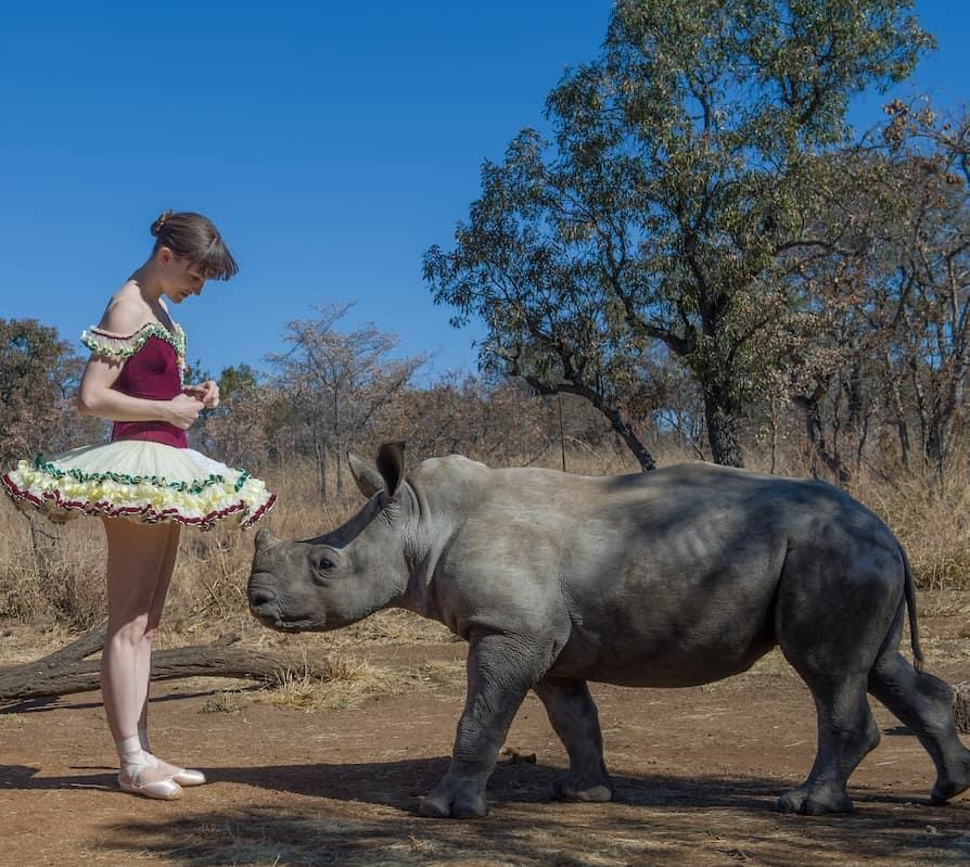 ballet-rhinoceros-danseuse-afrique-du-sud-decouverte