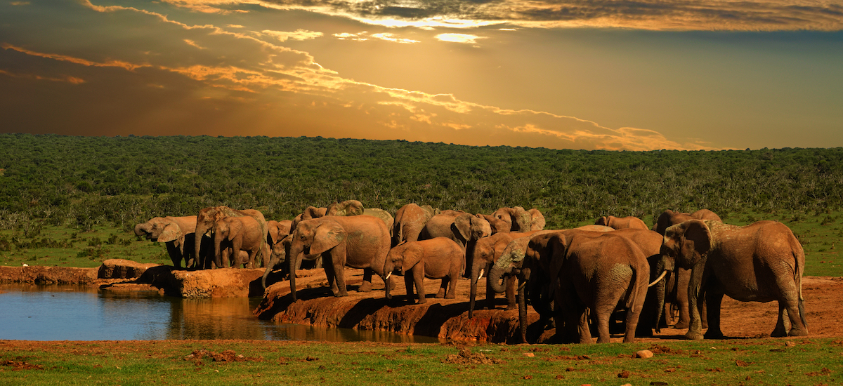 Abreuvoir des éléphants
