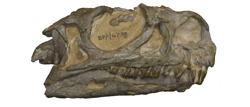 dinosaure-crane-afrique-du-sud-decouverte