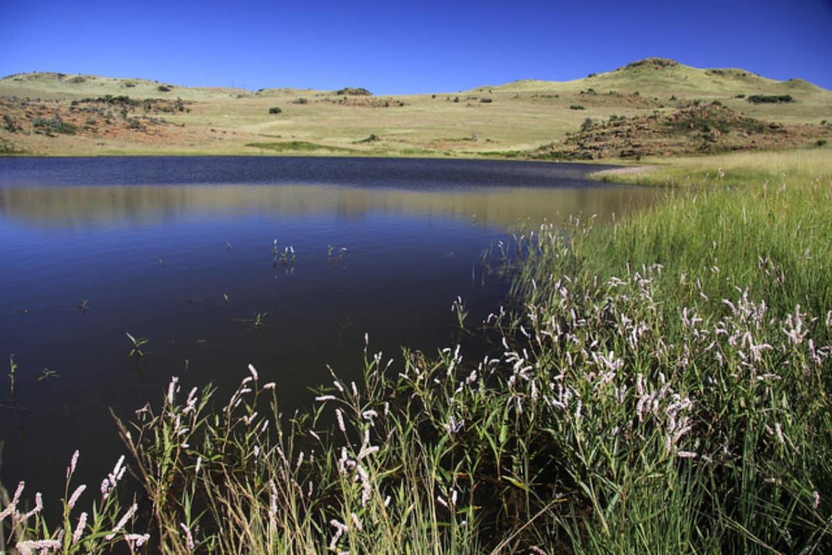 suikerbosrand-lac-afrique-du-sud-decouverte