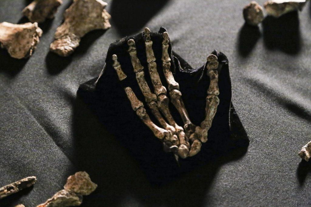 unesco-fossiles-humains-afrique-du-sud-decouverte