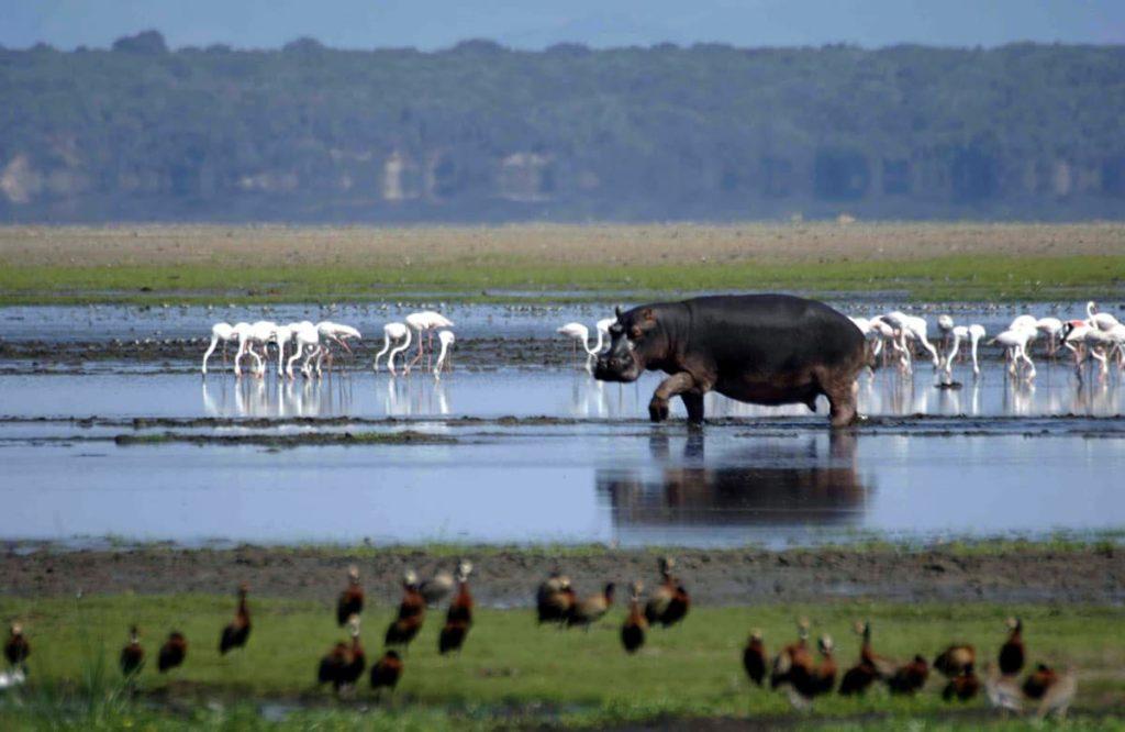 unesco-isimangaliso-wetland-afrique-du-sud-decouverte