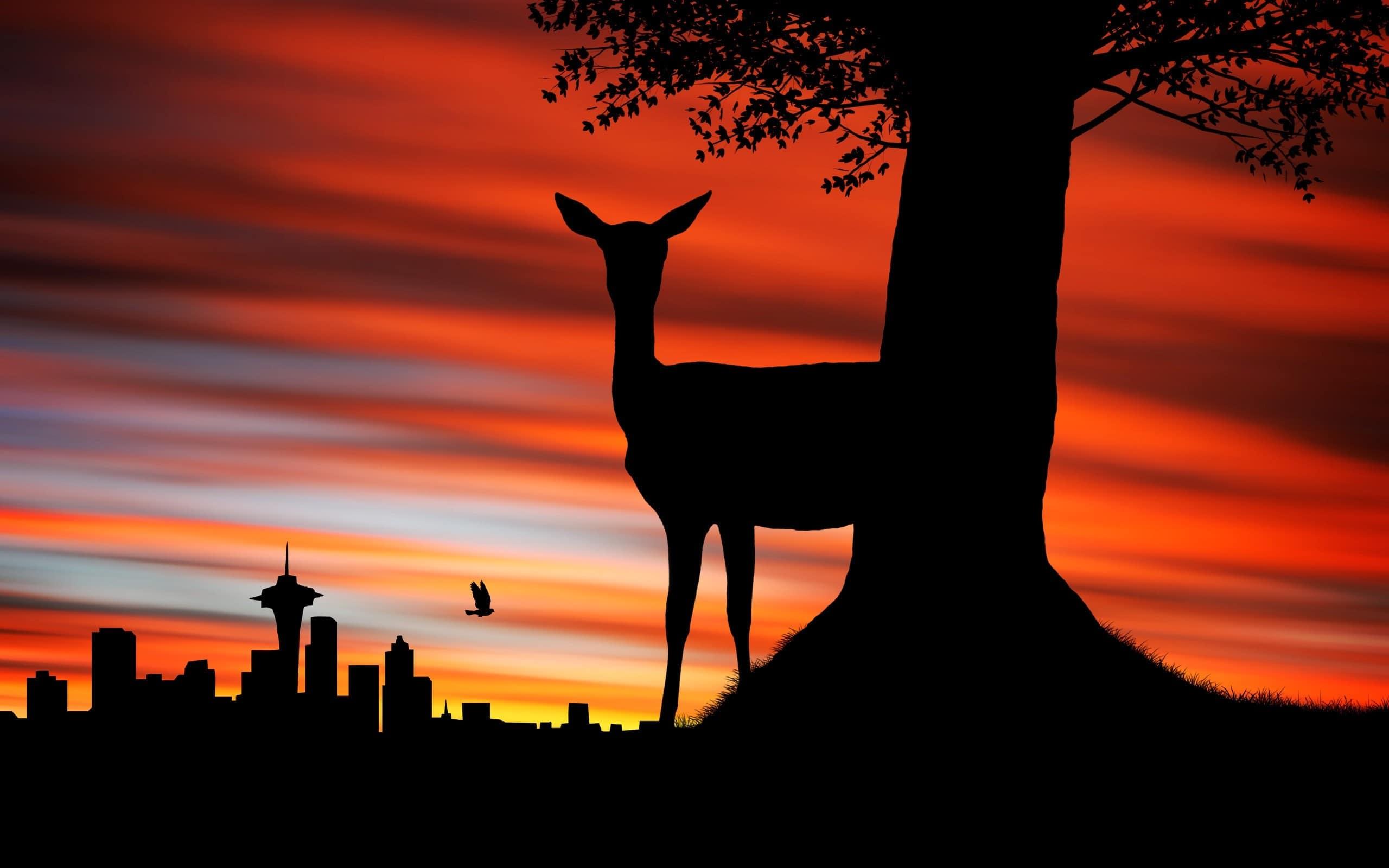 couchers-de-soleil-cover-biche-afrique-du-sud-decouverte