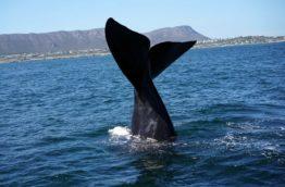 whale-route-cap-queue-afrique-du-sud-decouverte