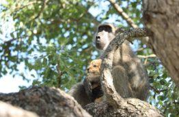 babouin-cover-afrique-du-sud-decouverte