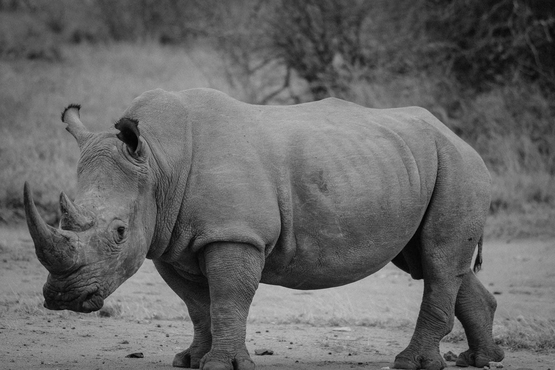 suricate-rhino-afrique-du-sud-decouverte