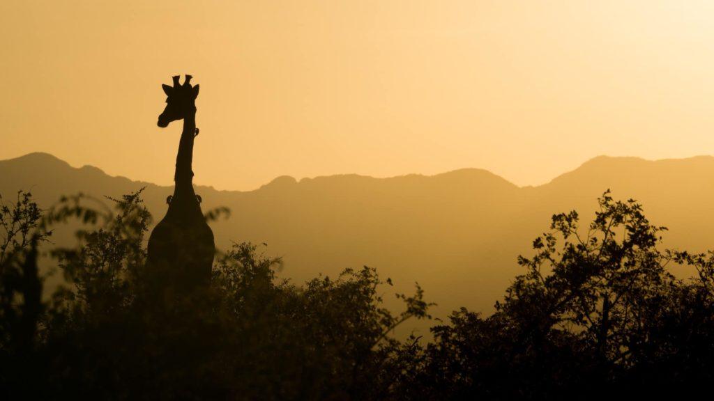 safari-virtuel-coucher-soleil-afrique-du-sud-decouverte