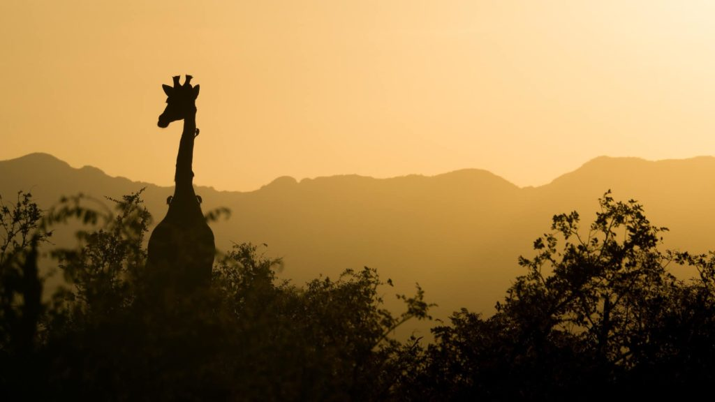 safari-al-atardecer-virtual-sud-africa-discovery