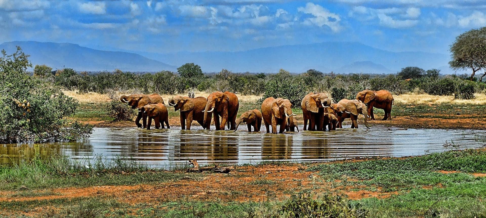 safari-virtuel-cover-afrique-du-sud-decouverte