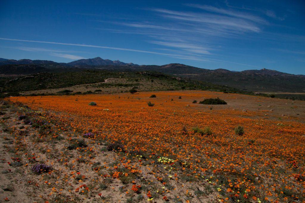 parque-nacional-namaqua-sud-africa-discovery