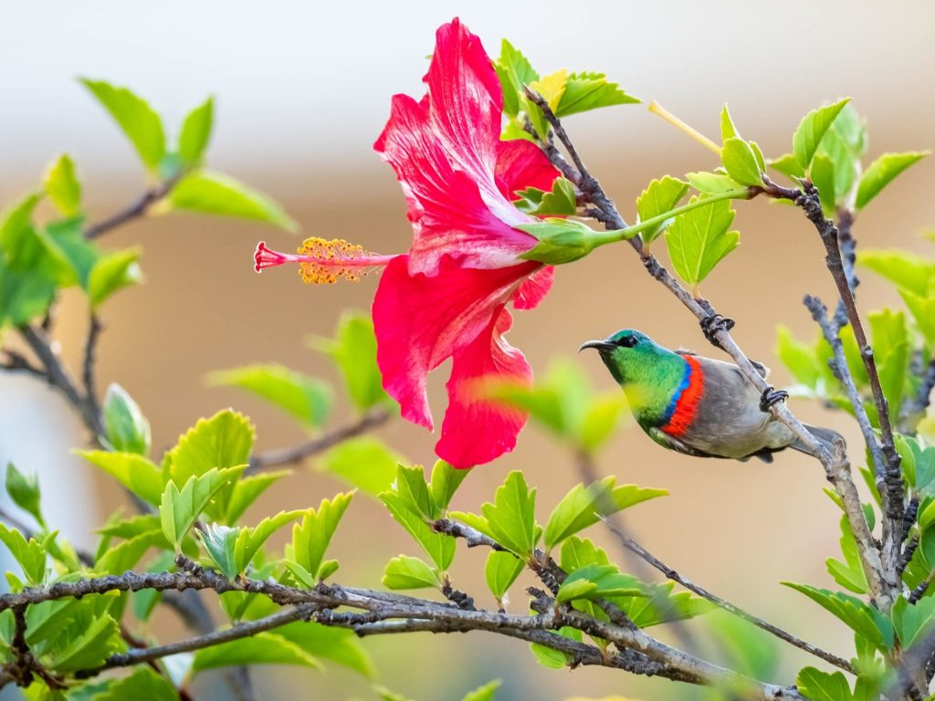 región-floral-del-cabo-3-south-africa-discovery.jpg