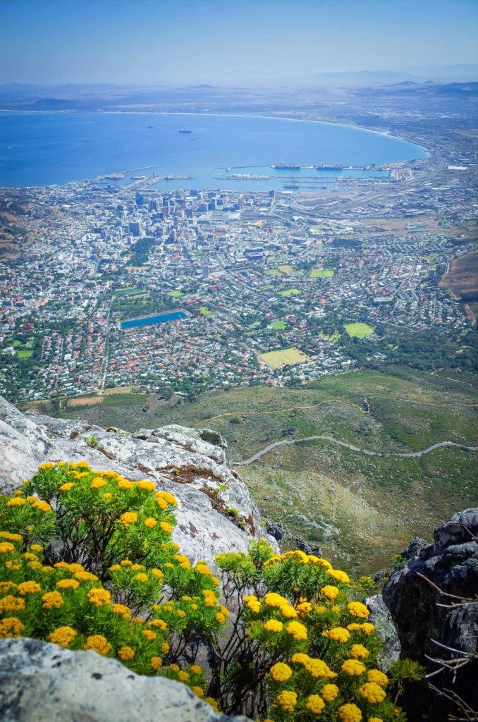 región-floral-del-cabo-1-sud-africa-discovery