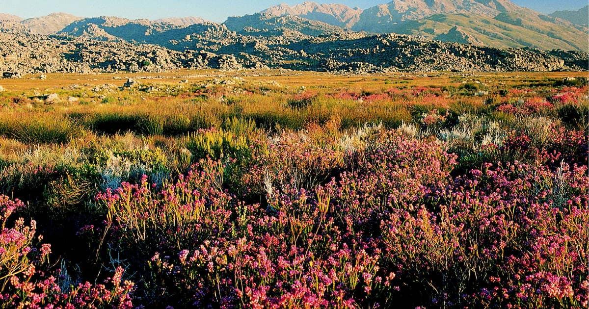region-florale-du-cap-cover-afrique-du-sud-decouverte