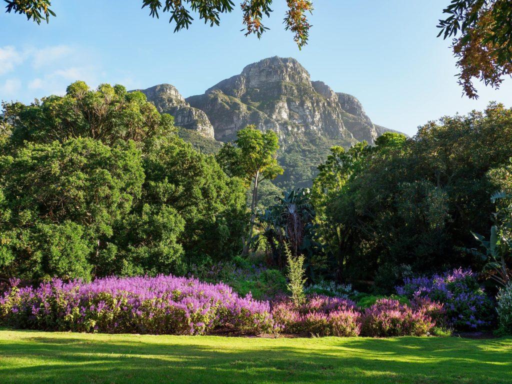 region-florale-du-cap-kirstenbosch-botanical-gardens-south-africa-discovery