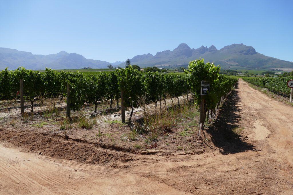 vignobles-stellenbosch-afrique-du-sud-decouverte