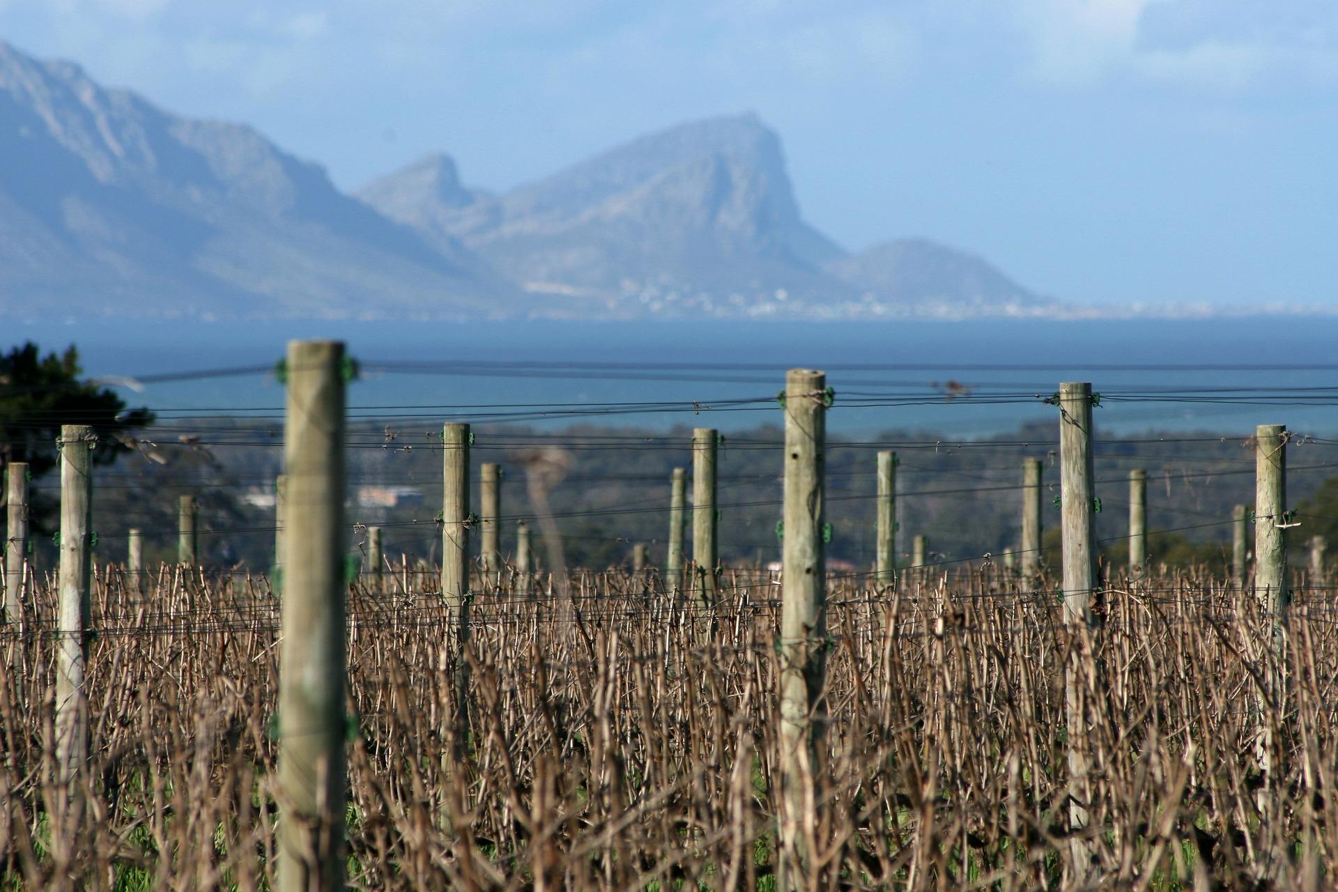 vignobles-stellenbosch-cover-afrique-du-sud-decouverte