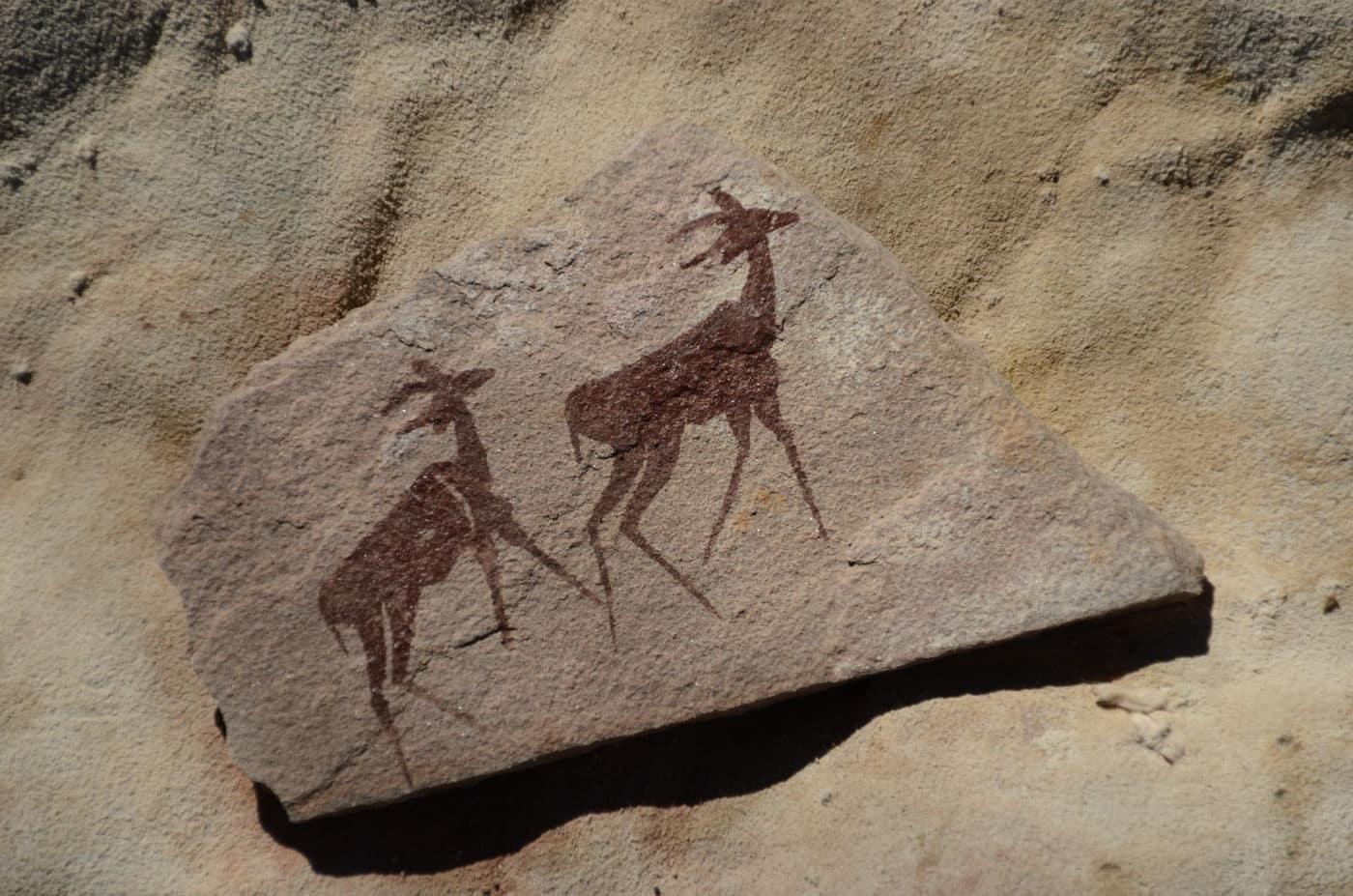 wildebeest-kuil-rock-art-centre-animaux-afrique-du-sud-decouverte