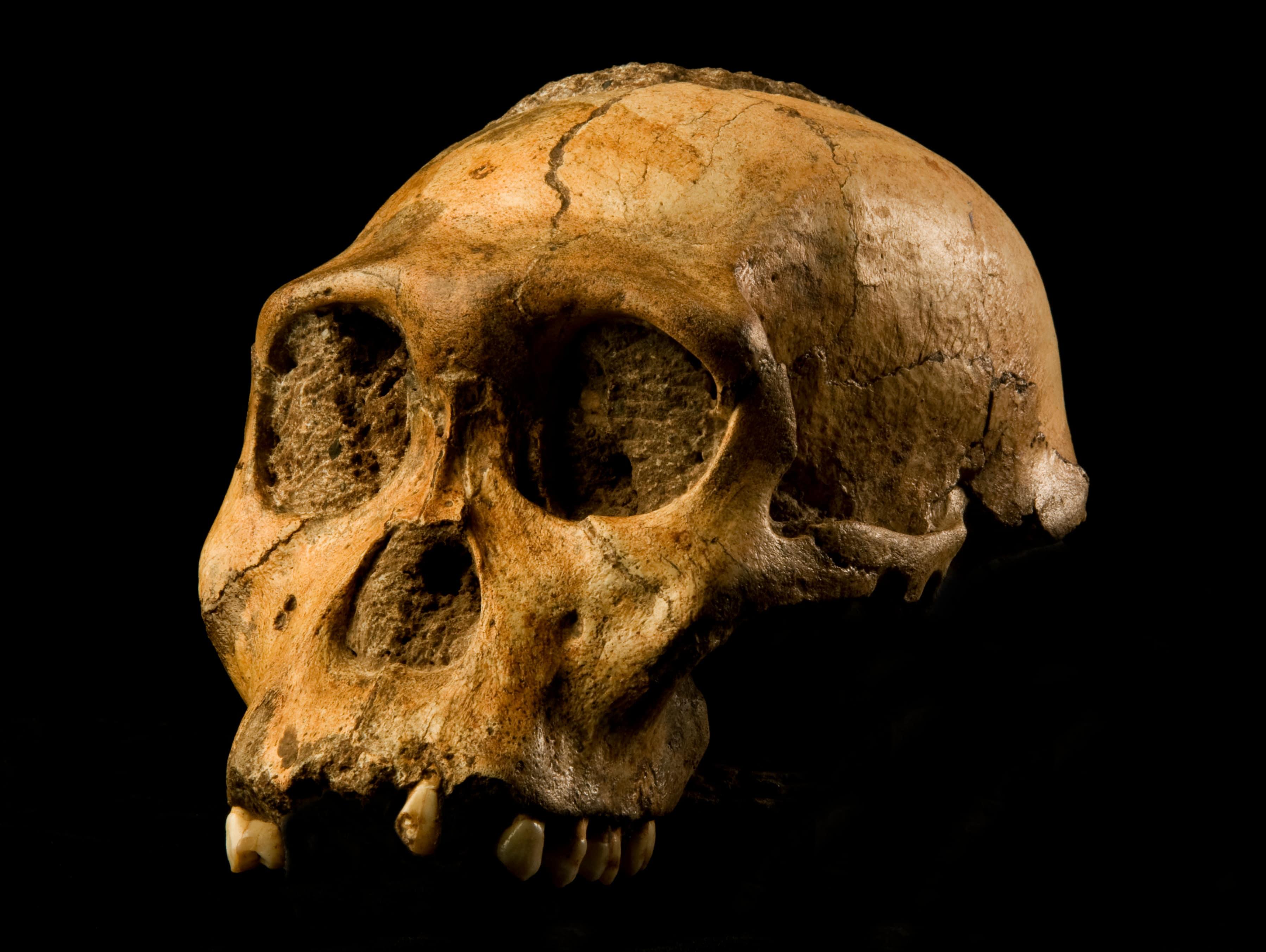 paleo-route-australopithecus-sediba-afrique-du-sud-decouverte