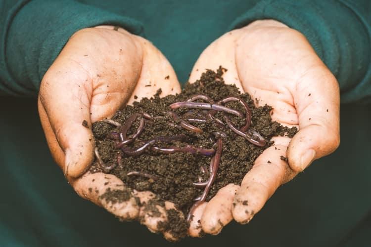 viaje-verde-compost-sibaya-hotel-sud-africa-discovery
