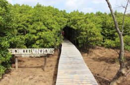 beachwood-mangroves-nature-reserve-cover-afrique-du-sud-decouverte