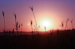 gauteng-cover-afrique-du-sud-decouverte
