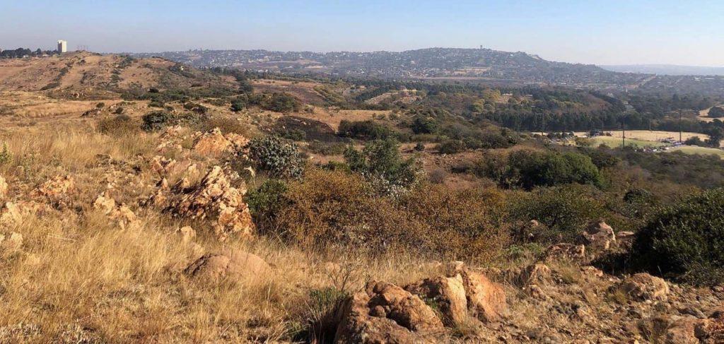 gauteng-melville-koppies-afrique-du-sud-decouverte