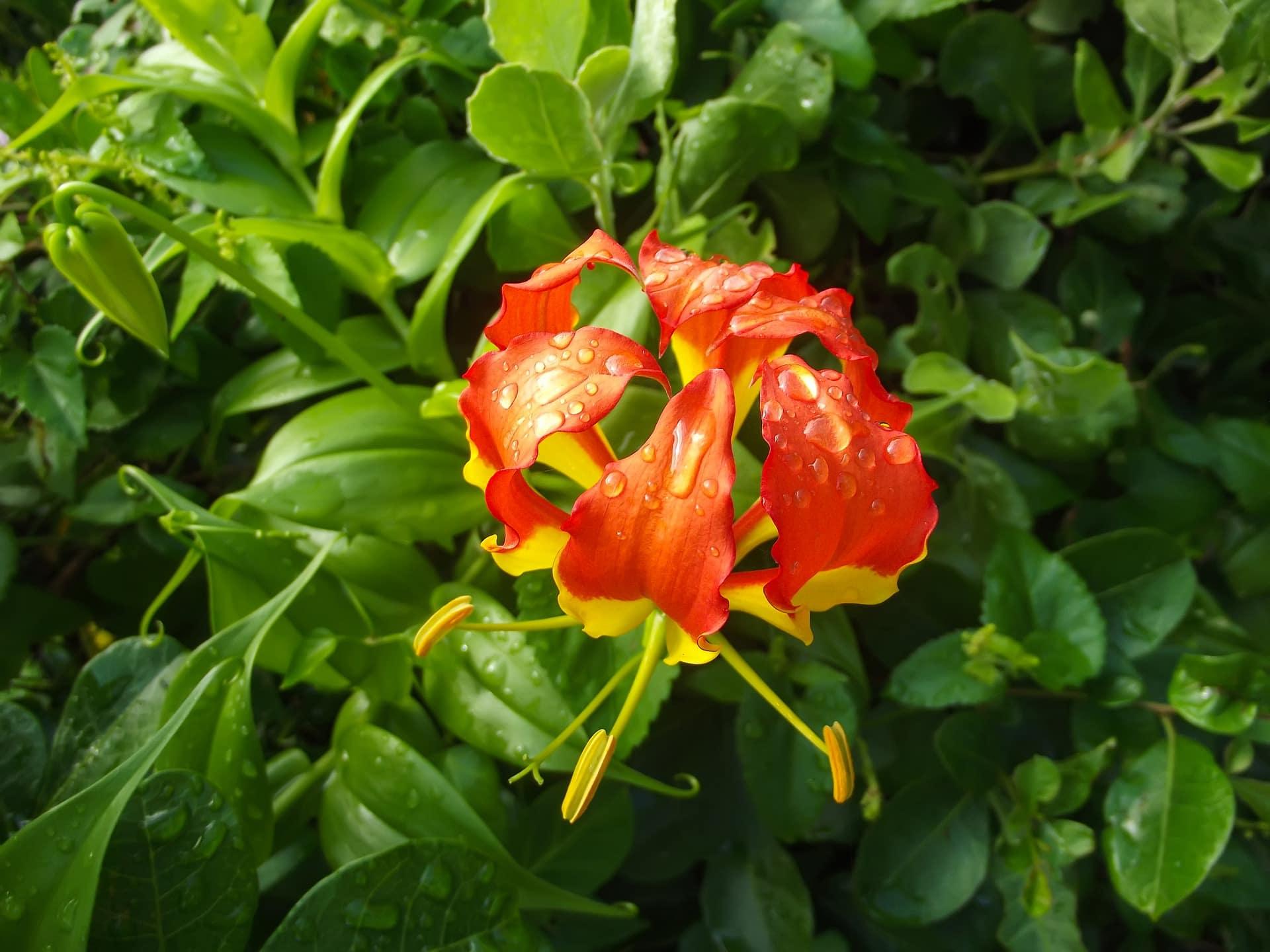 fleurs-sauvages-cover-afrique-du-sud-decouverte