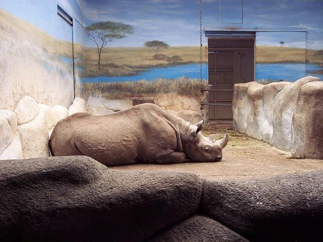 interaction-rhino-afrique-du-sud-decouverte