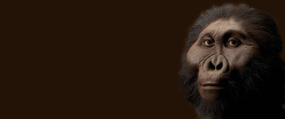 paranthropus-robustus-afrique-du-sud-decouverte