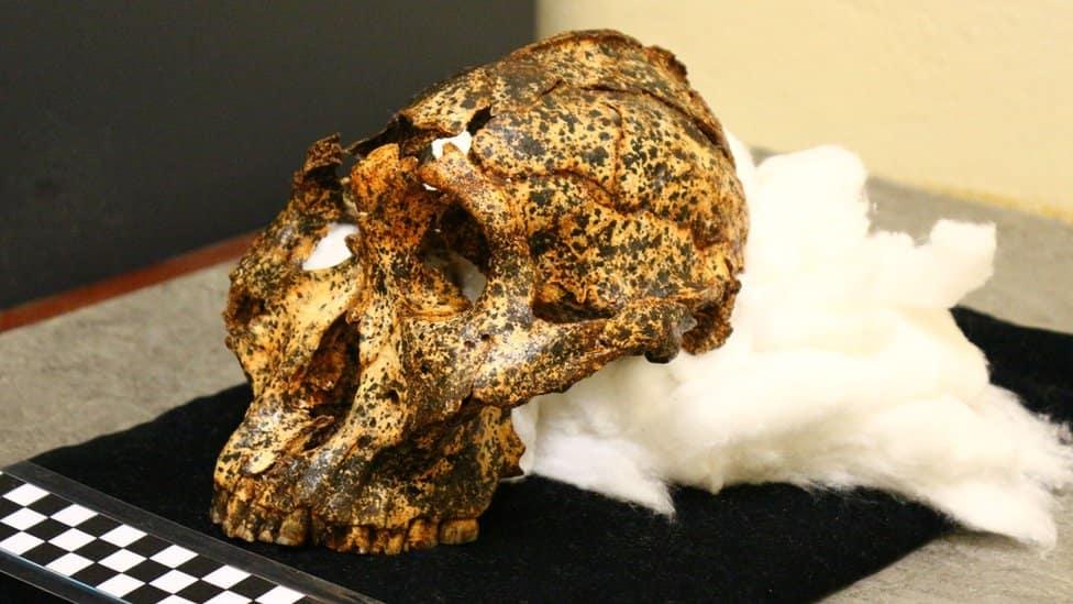 paranthropus-robustus-dernier-afrique-du-sud-decouverte
