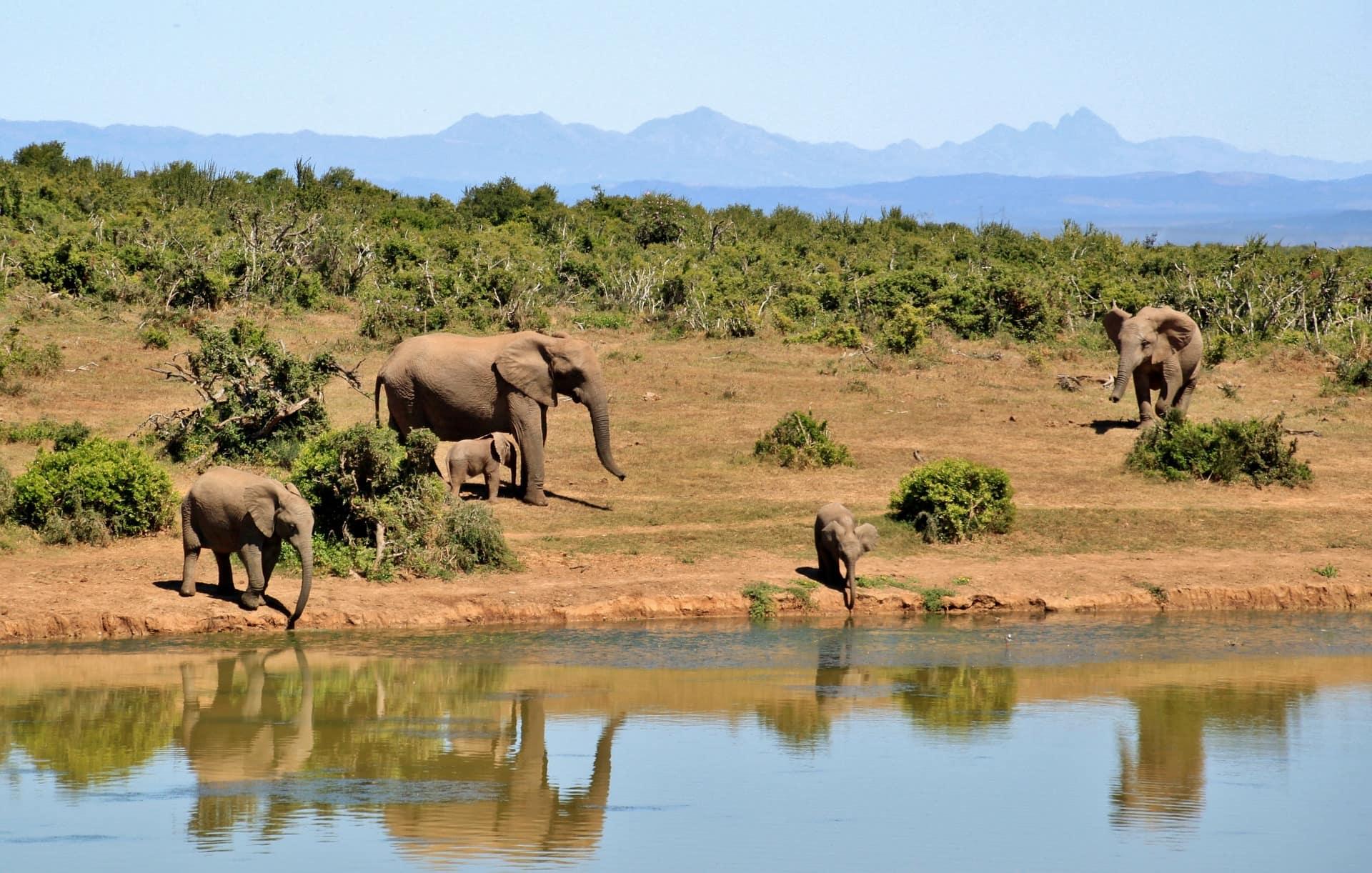 sauvage-elephant-cover-afrique-du-sud-decouverte
