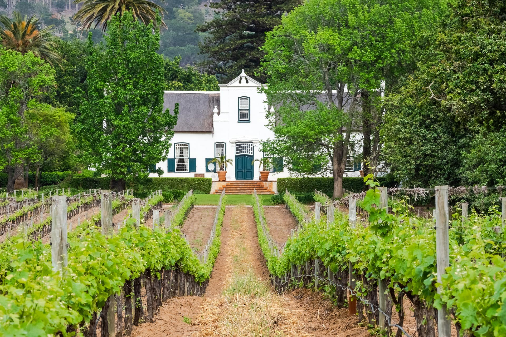 vignobles-afrique-du-sud-decouverte