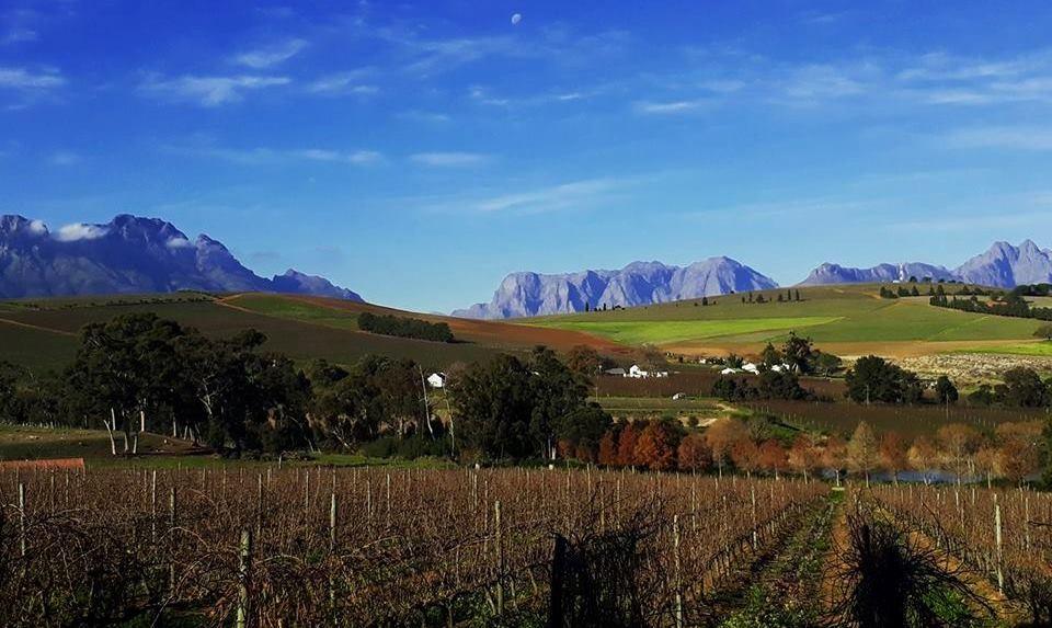 vignobles-clos-malverne-stellenbosch-2-afrique-du-sud-decouverte
