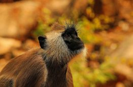 singe-vervet-cover-afrique-du-sud-decouverte