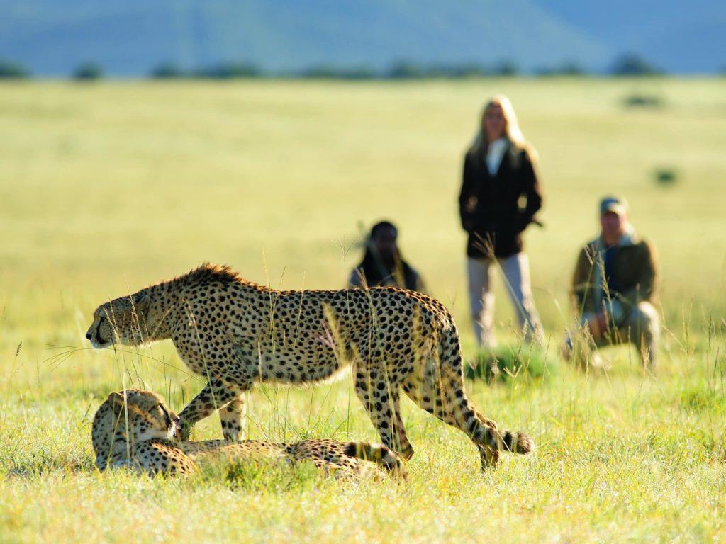 safari-a-pied-cover-afrique-du-sud-decouverte